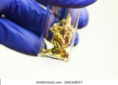 medical cannabis test tube laboratory