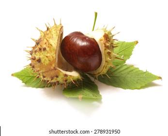 Medical Chestnut
