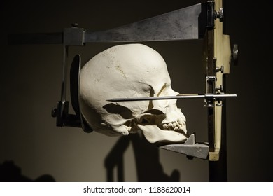 Medical cranium for studies, medicine detail