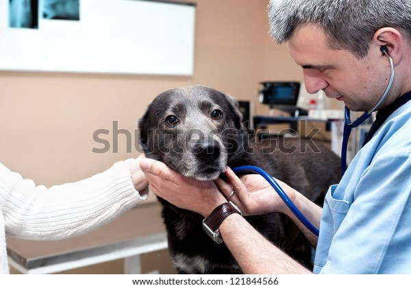 Medical examination of my dog to the vet
