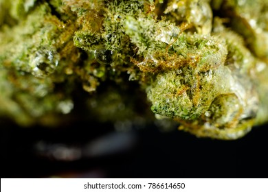 Medical Flower of Cannabis - close view of marijuana bud on the black background.