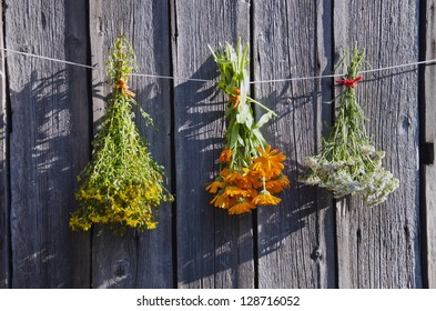 medical herbs bunches on old wooden farm wall and evening sunlight
