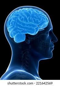 medical illustration of a human brain