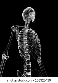 medical illustration of the rib cage