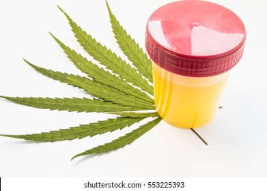 Medical laboratory container with urine sample rests on green leaves of marijuana (weed). Photo concept for visualization determine presence of cannabis in urine in judicial or medical practice