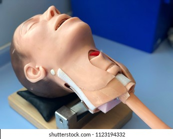 Medical mannequin for airway emergency drills.