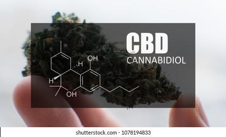 Medical Marijuana close-up.
