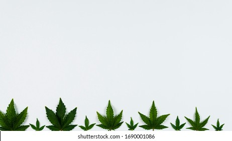 Medical marijuana leaves on white background, flat lay. Concept of health care, herbal and alternative medicine. Top view, copy space