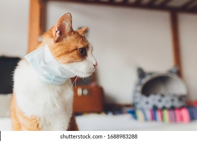 Medical mask for cat. Virus protected cat. Isolated cat at home.