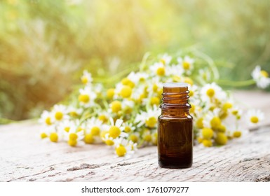 Medical oil bottle and chamomile plant bloom herbs lying on a wooden desk ina spring garden.