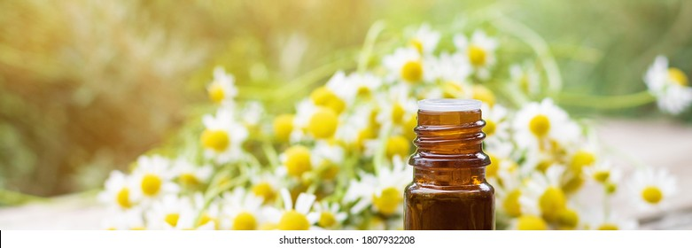 Medical oil bottle and chamomile plant bloom herbs lying on a wooden desk ina spring garden. Advertising banner template.