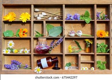 Medical plants in a letter case