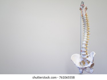 Medical plastic spine on white background