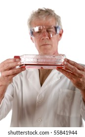 a medical research scientist examines a flask of red blood cells          isolated on white