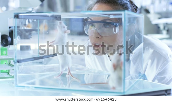 Medical Research Scientists Examines Laboratory Mice kept in a Glass Cage. She Works in a Light Laboratory.