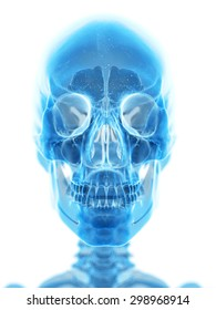 medically accurate illustration of the human skull