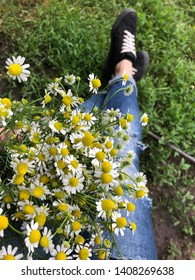 medicinal chamomile flowers on the background of women legs
