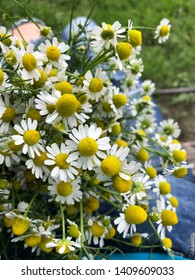 medicinal chamomile flowers on the meadow