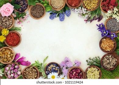Medicinal herb and flower border with fresh and dried herbs and flowers used in natural herbal medicine and homeopathic remedies on parchment paper background.