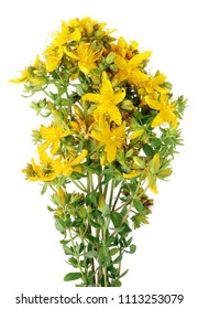 Medicinal herb St. John's wort with yellow fragrant flowers. Tea from this plant heals the rhinitis. Isolated on white studio macro shot
