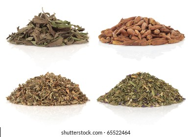 Medicinal herbs of balm of gilead, damiana, plantain and violet leaves and flowers also used in magical potions. Isolated over white background.