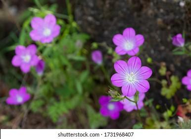 medicinal herbs, medicinal flowers photos - Shutterstock ID 1731968407
