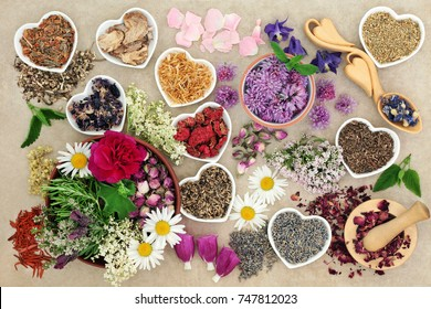 Medicinal herbs and flowers used in herbal medicine, homeopathic and aromatherapy remedies on hemp paper background. Top View.