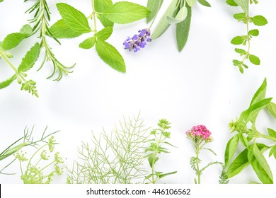 medicinal herbs on white background