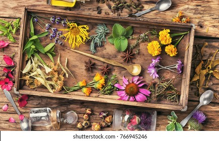 Medicinal herbs and plants in a wooden box in a vintage background.