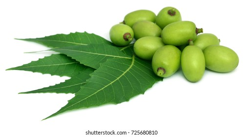 Medicinal neem leaves with fruit over white background
