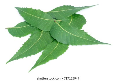 Medicinal neem leaves over white background