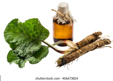 Medicinal plant - a burdock. The roots and leaves of burdock, burdock oil in bottle isolated on white background. It is used for the treatment and care of hair