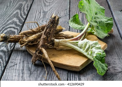 Medicinal plant - a burdock, is used for the treatment and care of hair. The roots and leaves on a cutting board on a dark wooden background