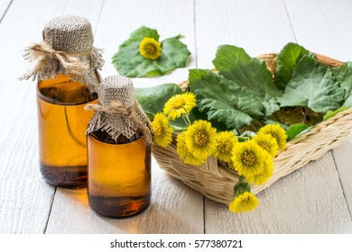 Medicinal plant coltsfoot (Tussilago farfara). The infusion, leaves and flowers in a basket on white wooden background. Selective focus