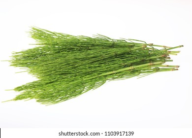 Medicinal plant, Equisetum arvense, the field horsetail or common horsetail