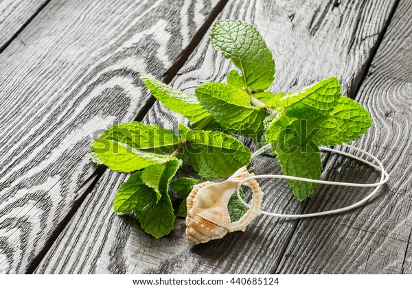 Medicinal plant: mint (Mentha spicata). Mint essential oil in aromatic pendant, fresh mint on a dark wooden table. Used in aromatherapy, phytotherapy, SPA, healthy and vegetarian food