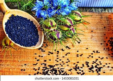 Medicinal plant Nigella sativa, black caraway, also known as black cumin, nigella