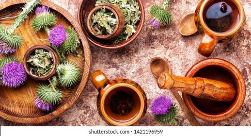 Medicinal plant thistle.Pink thorny thistle flower.Silybum marianum.Herbal tea
