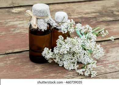Medicinal plant yarrow (achillea millefolium) and pharmaceutical bottle on old wooden table. Yarrow - a popular means of treatment in herbal medicine, has anti-inflammatory and antiseptic properties