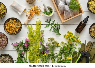 Medicinal plants, bowls of dry medicinal herbs, tea bags, dropper bottle of essential oil, pruner and gloves on wooden table. Top view, flat lay. Alternative medicine.