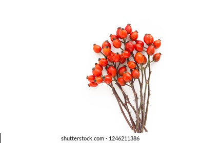 Medicinal plants and herbs composition Pile of Dog rose bunch branch Rosa canina on white