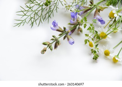 medicinal plants on white background