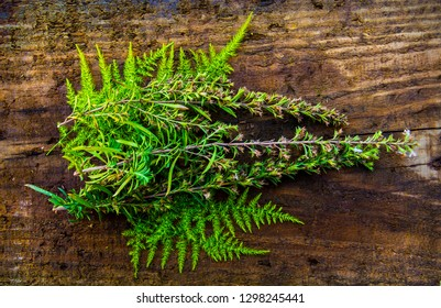 medicinal plants on a wooden background