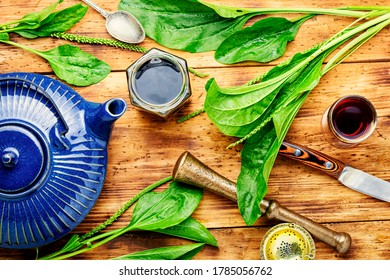 Medicinal tincture,tea,and plantain extracts.Medical herbs in herbal medicine.Fresh plantain leaves