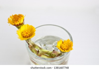 Medicinal useful plant coltsfoot. Yellow flowers of coltsfoot in medical ware. Health care. Ethnoscience.