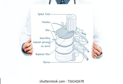 Medicine and Anatomy.  Doctor and  anatomical spine. Facet joints