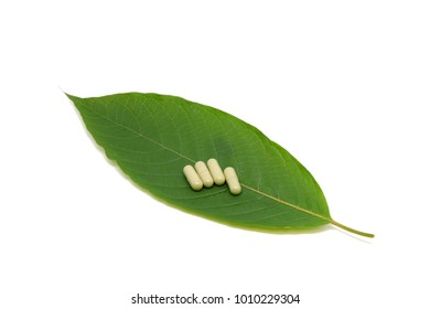 medicine capsule and Mitragyna speciosa leaf (kratom), Kratom is Thai herbal which encourage health. isolated on white background with clipping path