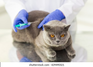 medicine, pet, animals, health care and people concept - close up of veterinarian doctor with syringe making vaccine injection to british cat at vet clinic