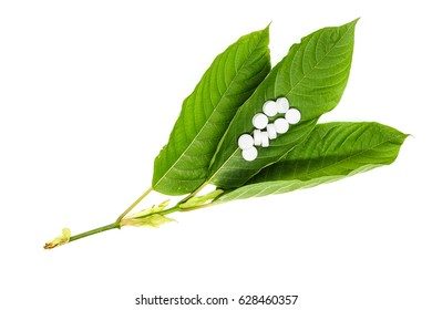 medicine, pill and Mitragyna speciosa leaf (kratom) plant in thailand. Close up and isolated on white background