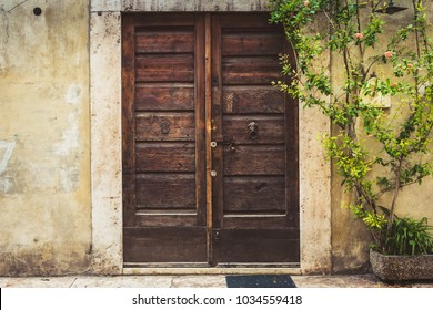 Medieval, ancient or vintage wooden door with plant (rose bush) in pot. Front view facade. Europe, Italy, Verona